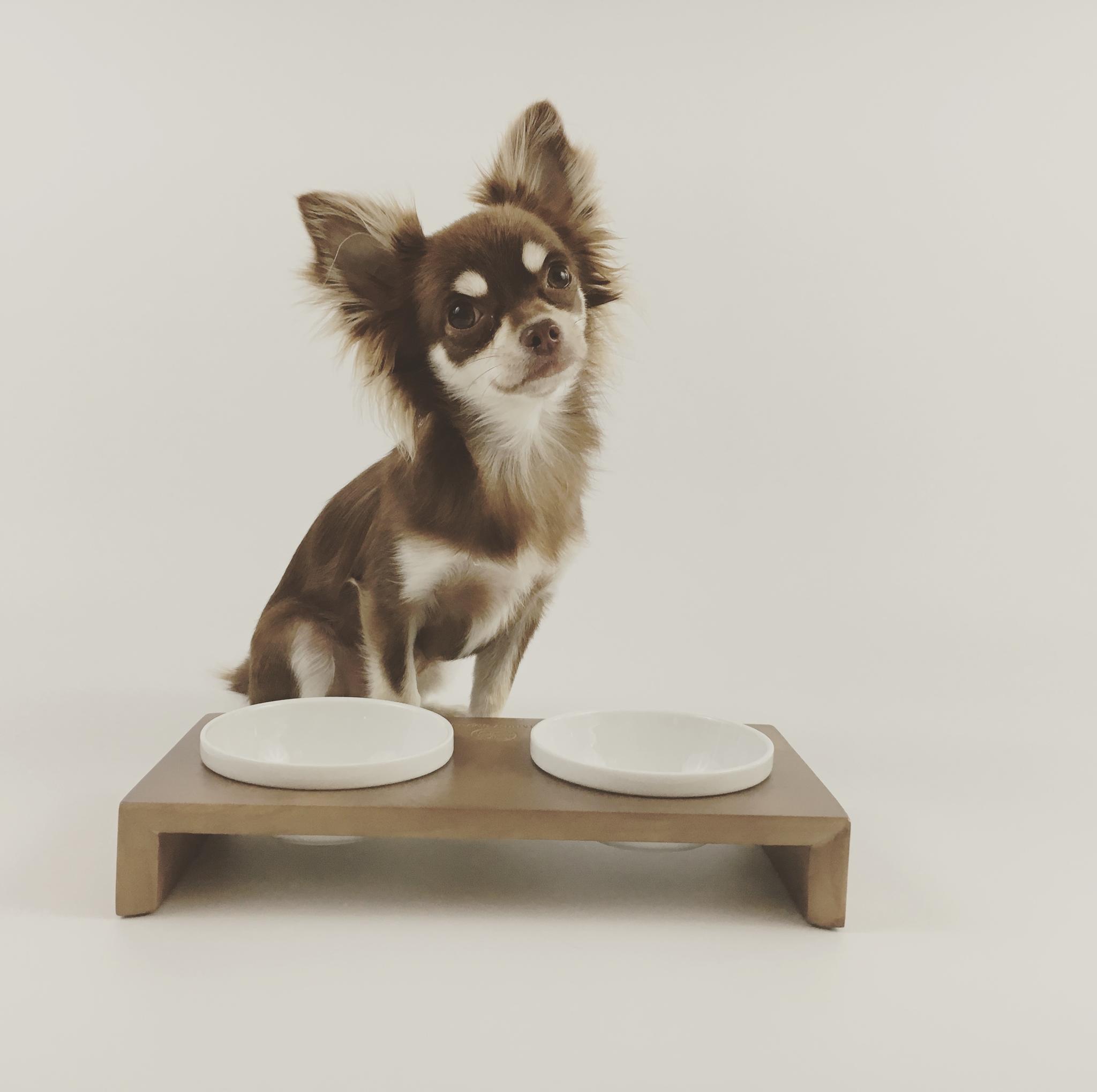 Futternapf Chihuahua