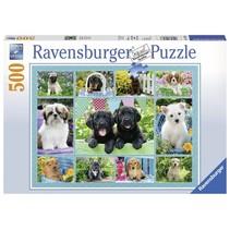Ravensburger - Puzzel - Snoezige hondjes - 500 stukjes