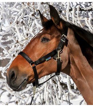 Bucas Dublin Foal Halter, Black