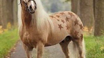 11x leuke manieren om jouw paard te scheren