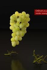 3D model  white grapes
