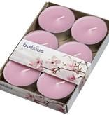 Bolsius kaarsen Scent maxi tea light 8 hours Magnolia