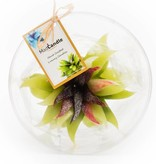 MadCandle Flower candle big green tea