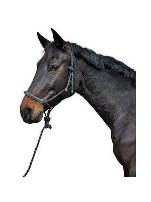 Knopen halster incl. touw zwart