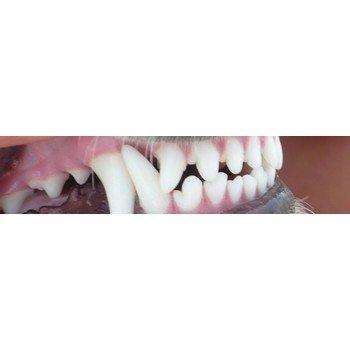 Gebitsverzorging/tandplak
