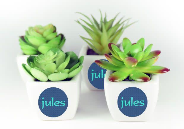 Vetplantjes met sticker