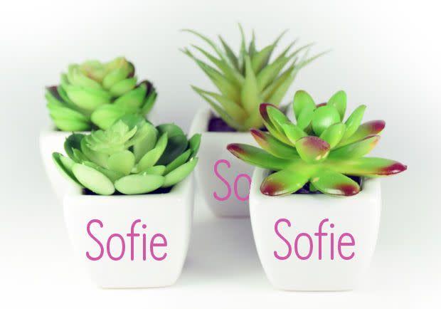 Vetplantjes met naamsticker