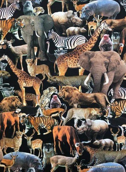 animal kingdom - tricot