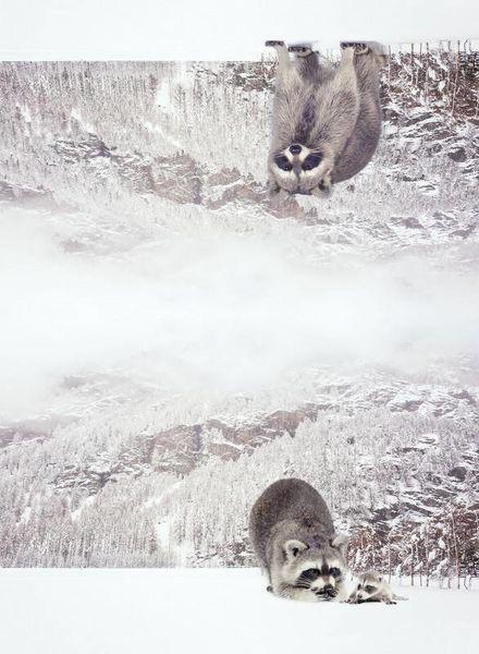 wasbeer paneel - tricot