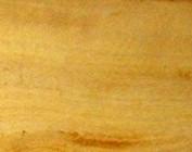 Amarillo Buchsbaum