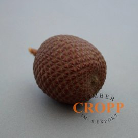 Laranja Nut, Buriti Fruit