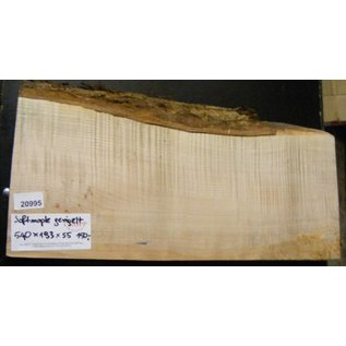 """Ahorn, amerik. SPITZAHORN, """"Soft Maple"""", geriegelt, 540 x 190 x 55 mm, 3,8  kg, Acer macrophyllum"""