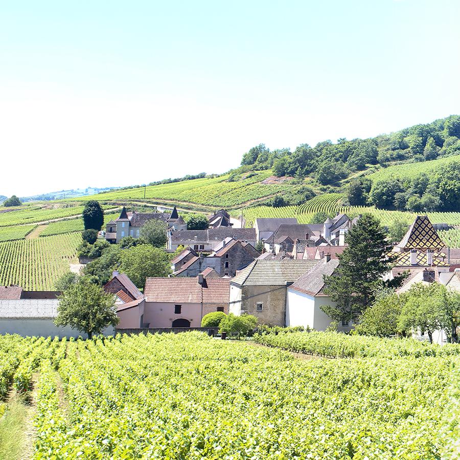 Guillaume wijnen