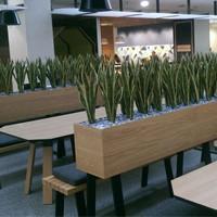 De 5 voordelen van groen op kantoor