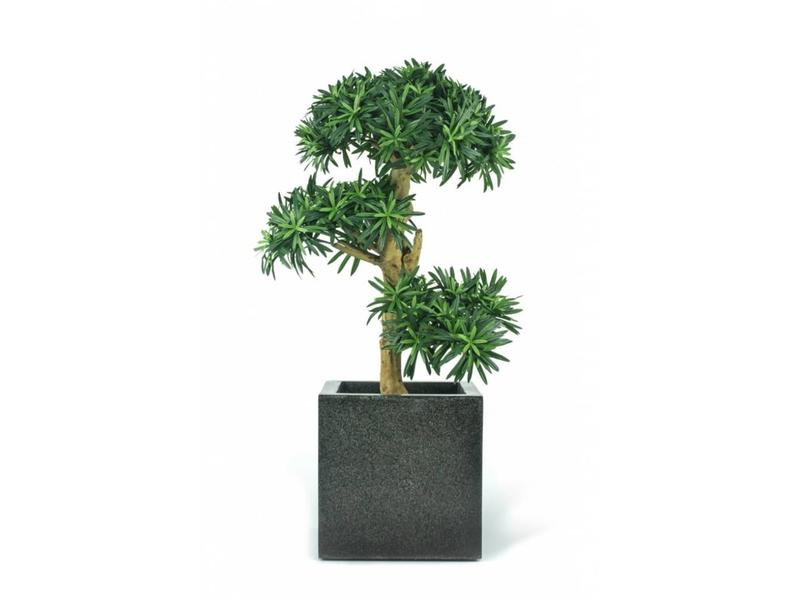 Kunstplant Podocarpus Bonsai 0.70m