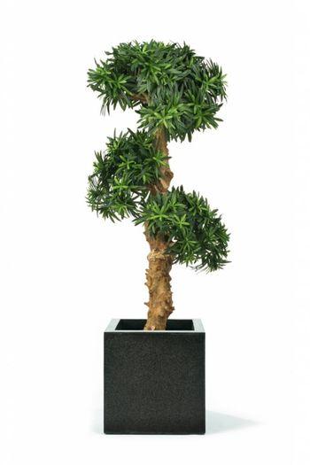 Kunstplant Podocarpus Bonsai 1.00m