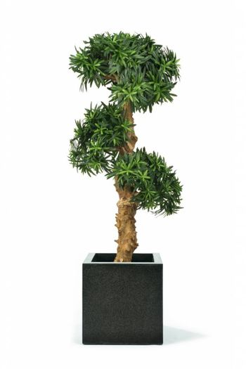 Kunstplant Podocarpus Bonsai 1.10m