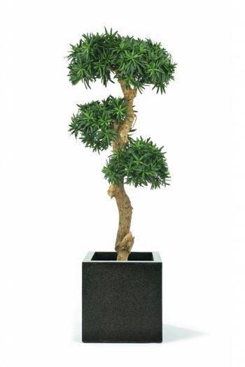 Kunstplant Podocarpus Bonsai 1.30m
