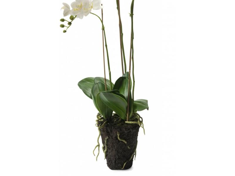Witte kunstbloem orchidee 75cm met kluit
