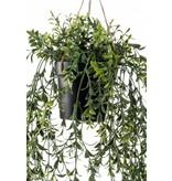 Kunst Hangplant Buxus 50cm