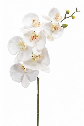 Phalaenopsis orchidee kunstbloem wit 83cm