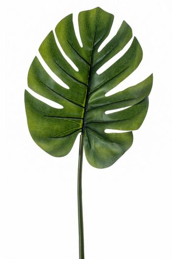 Monstera (gatenplant) kunstblad 73cm