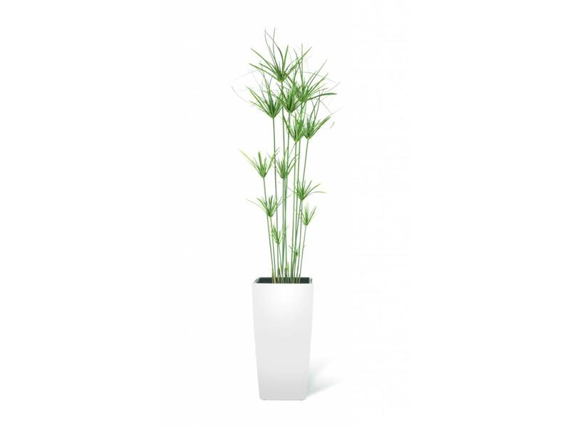 Kunst grasplant Cyperus 140cm