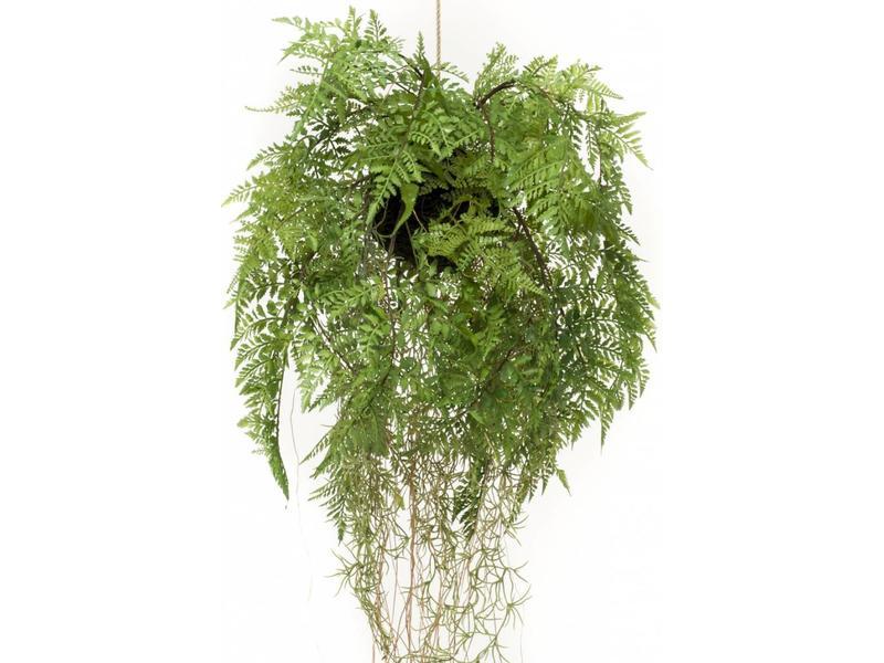 Kunst varen hangplant met wortels