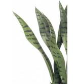 Kunstplant Sansevieria 50cm in pot
