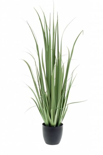 Yucca grass 120cm in pot