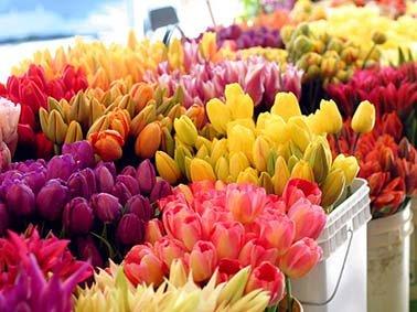 Kunstbloemen: langdurig kleur in huis