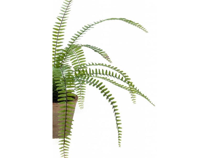 Kunst krulvaren Nephrolepsis 60cm