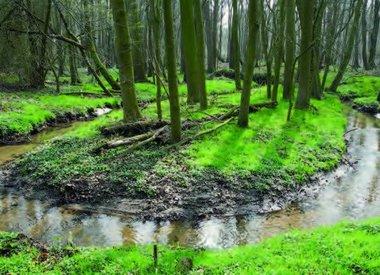 Oberflächengewässer/Gewässergüte