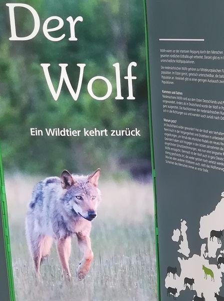 Der Wolf. Ein Wildtier kehrt zurück. (Ausstellung zum Ausleihen)