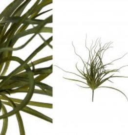 Fern plant green grass bunch