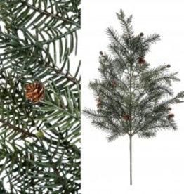 Twig plant green pine twig small pine cones