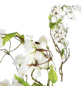 Blossom witte bloesemtak