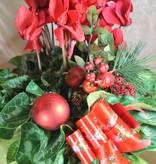 CICLAMINO confezione natalizia