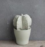 Kolony Cement Cactus S
