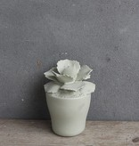 Kolony Cement Vetplantje