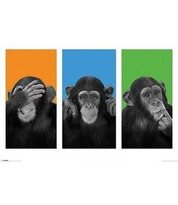 WILDSIDE - SEE NO EVIL, HEAR NO EVIL