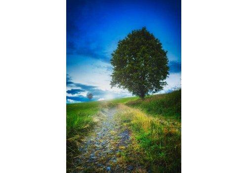 Steven Dijkshoorn Fantasy tree