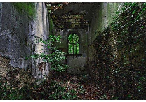 Steven Dijkshoorn Overgrown alley