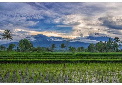 Indonesie - rijstvelden