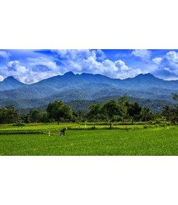 Rijstvelden - Indonesie