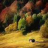Nature Art Color II