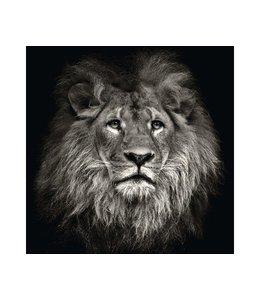 Leeuw zwart-wit
