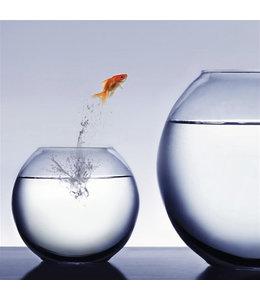Springende vis