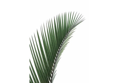 Palm leave 50x70