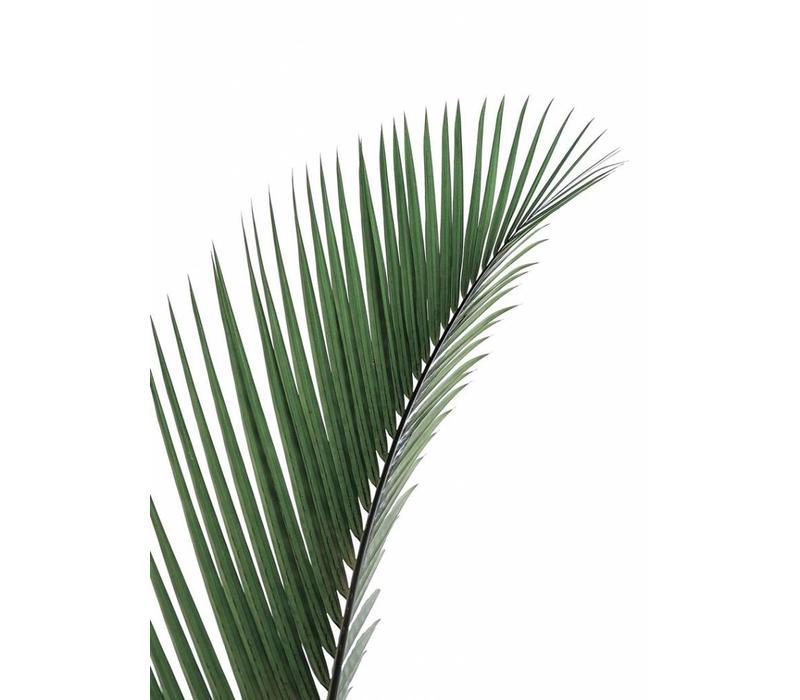 Palm leave 50x70